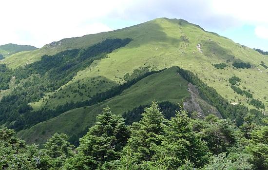 Abies kawakamii forest
