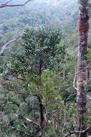 Mesilau River Kinabalu Park