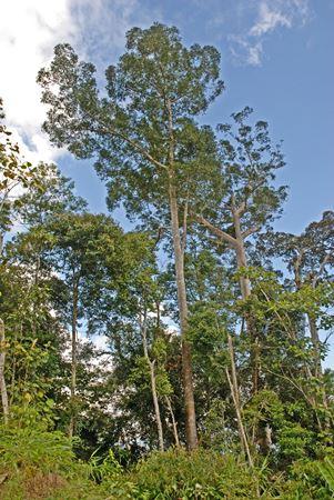 Crocker range, Sabah
