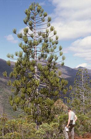 Mt Humboldt