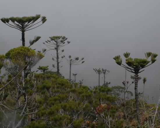 Mt. Humboldt