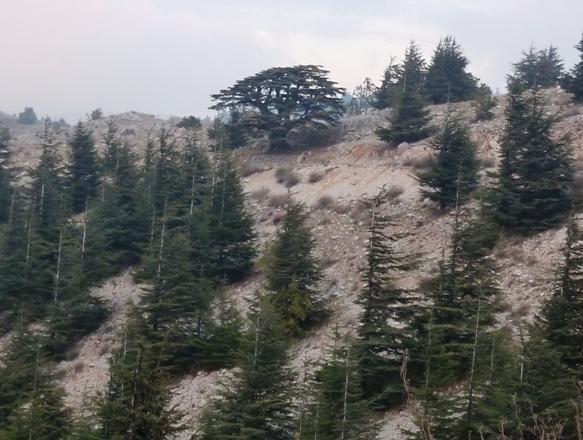Barouk Reserve, Mount Lebanon