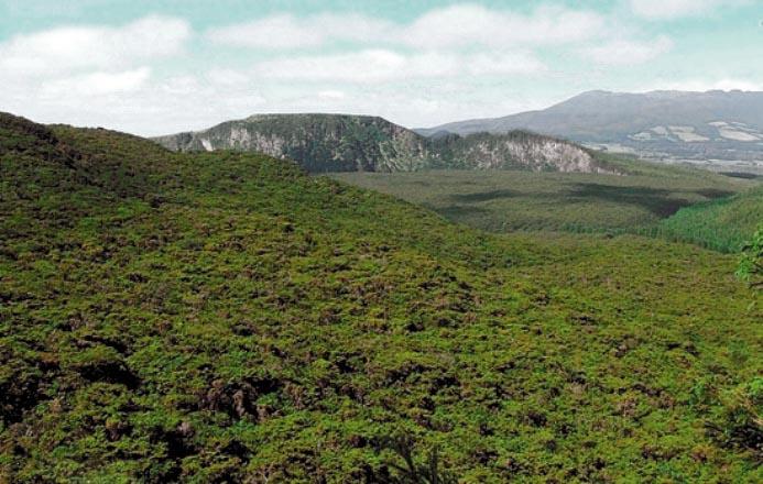 Mature forest, Terceira Island