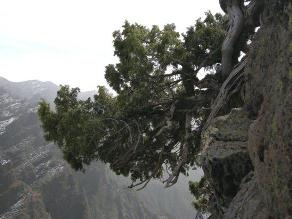 La Palma at 2300m