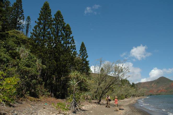 Coastal habitat, Plum