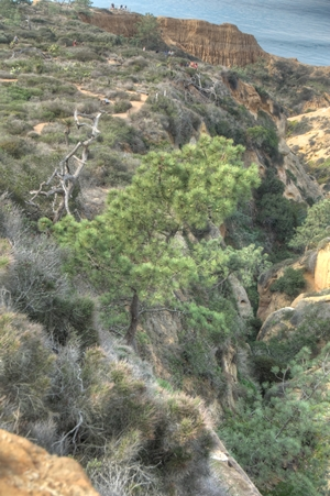 Mature tree in a steep-sided ravine