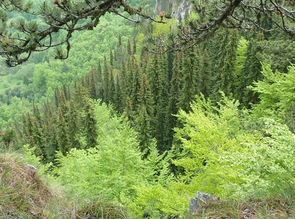 Forest,  Bosnia–Herzegovina