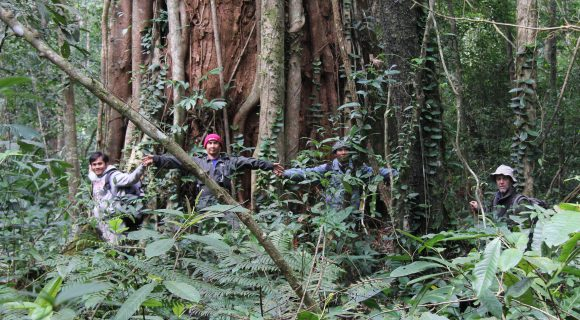 <p><em>Glyptostrobus pensilis</em>, Nakai Plateau, Lao PDR</p>
