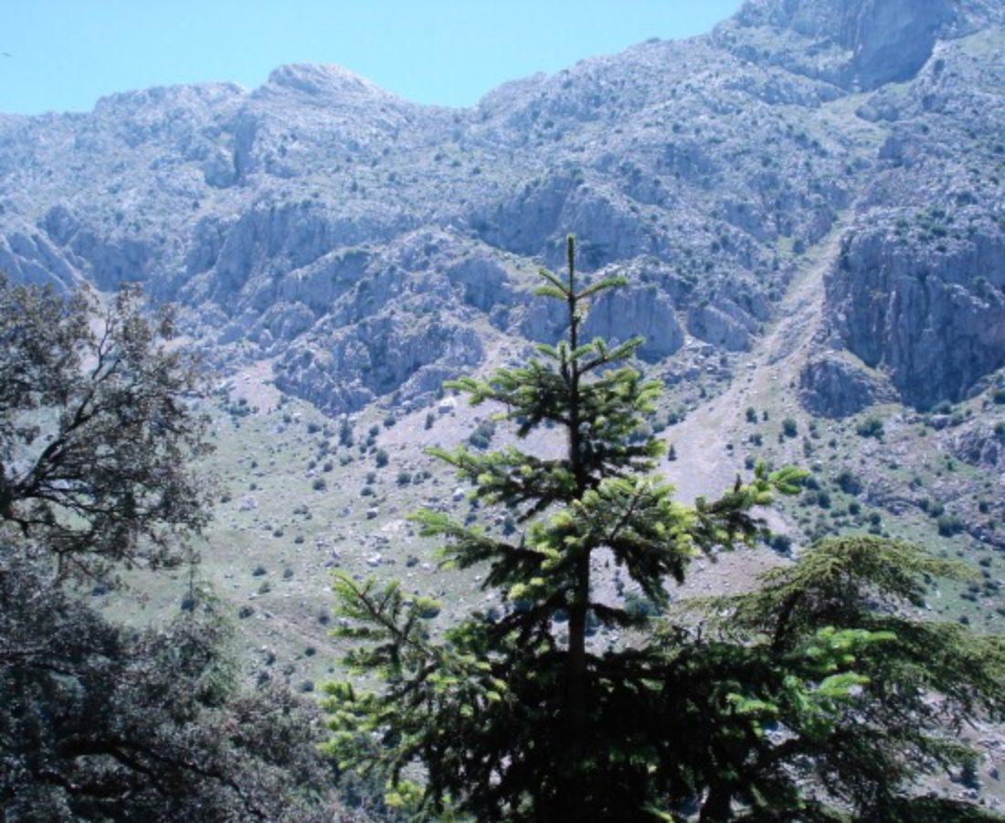 Habitat in the Djebel Babor Mountains