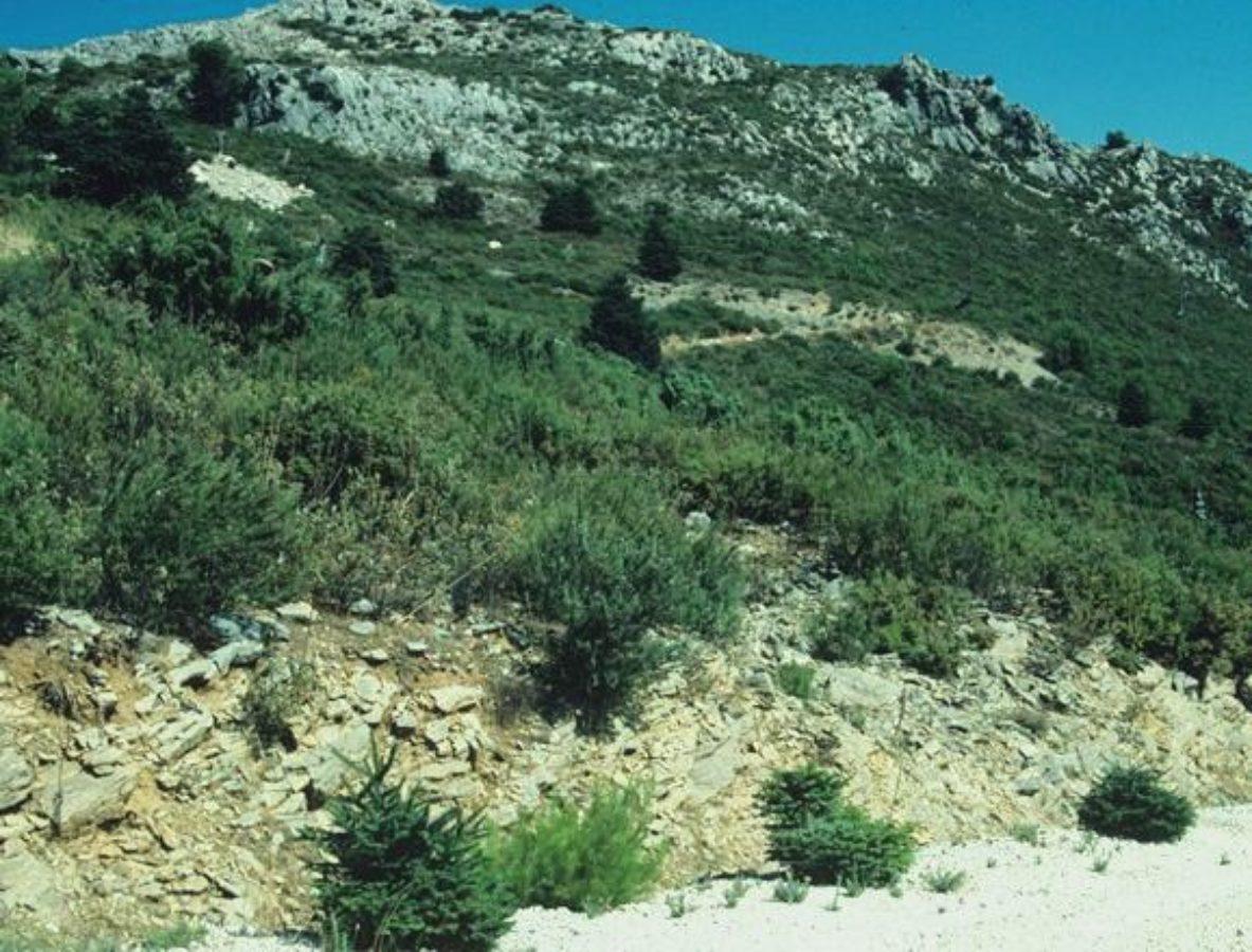 Regeneration in Sierra de las Nieves, Spain