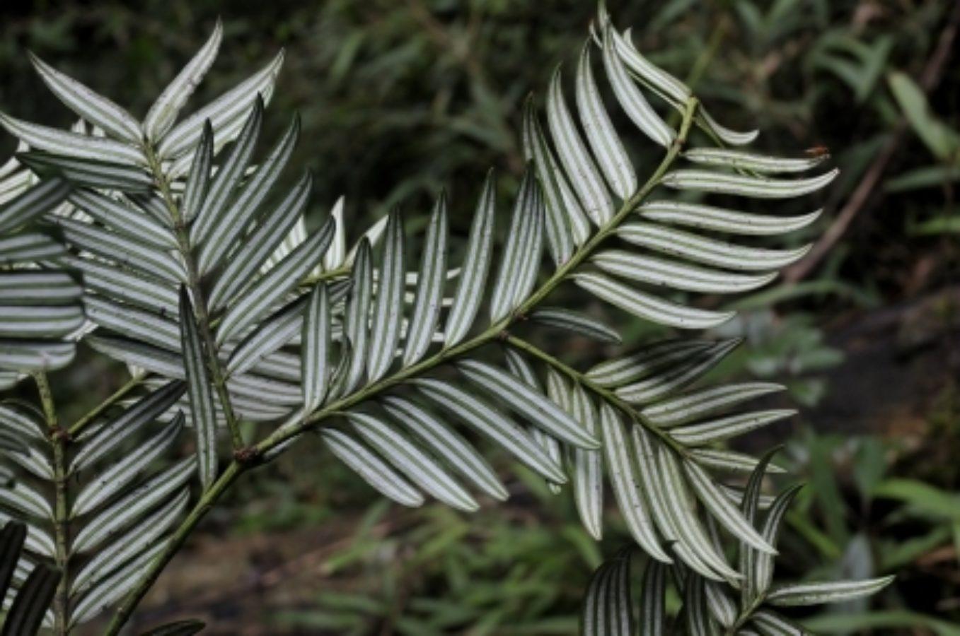Underside of foliage