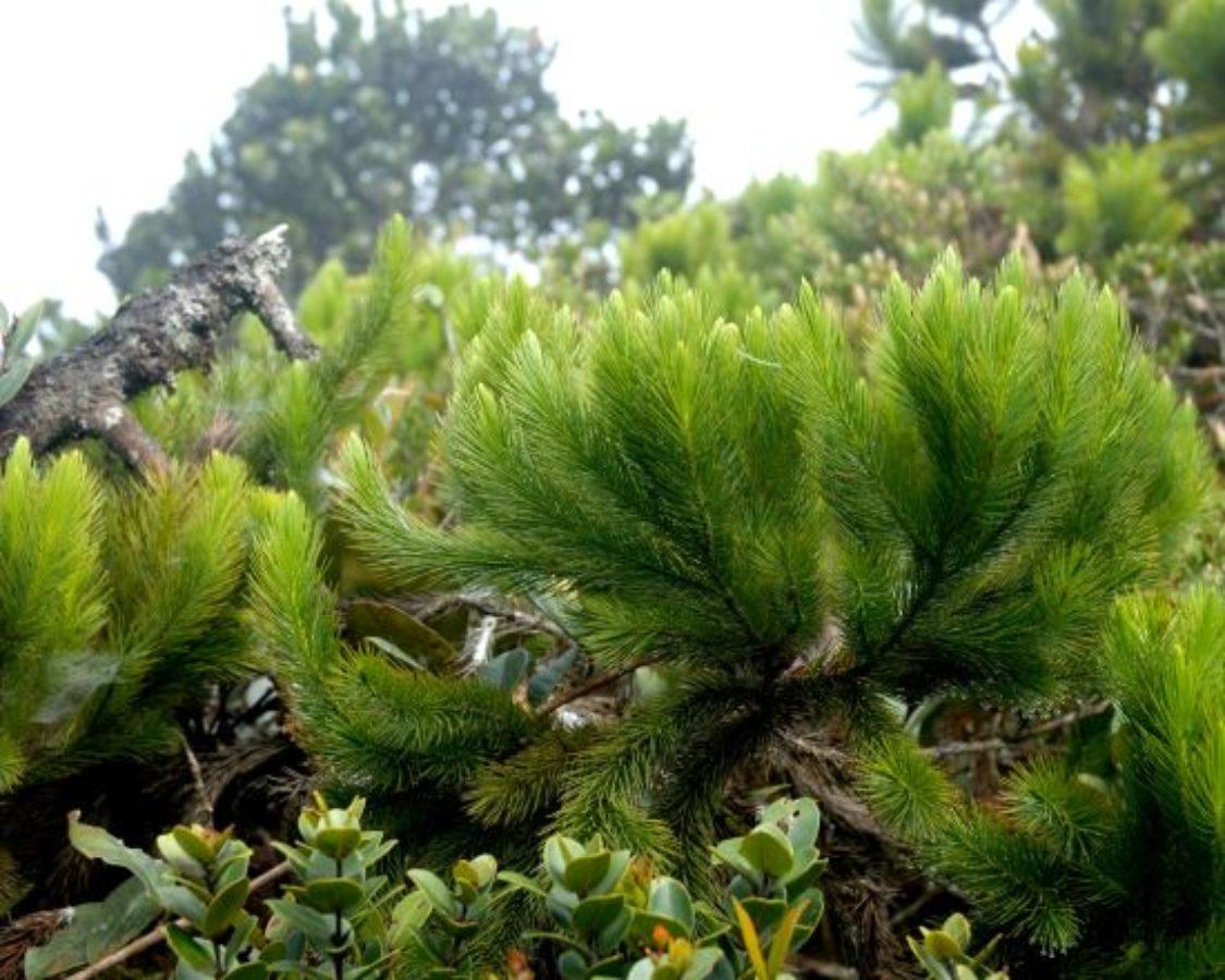 Genting Highlands, Gunung Hulu Kali