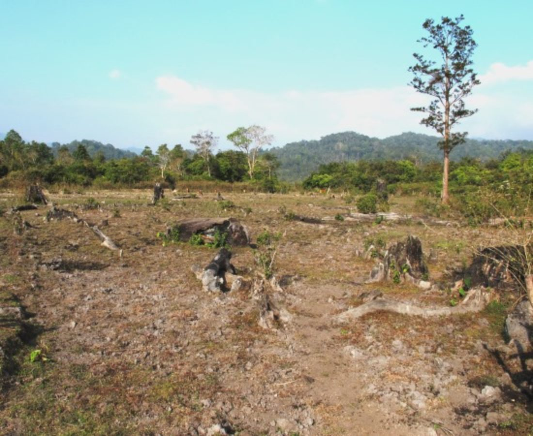 Former old-growth forest, Nakai Plateau Lao PDR