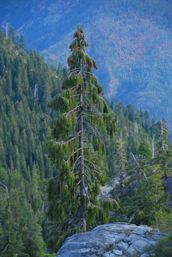 USA: Oregon, Suskiyou Mts; Bear Lake