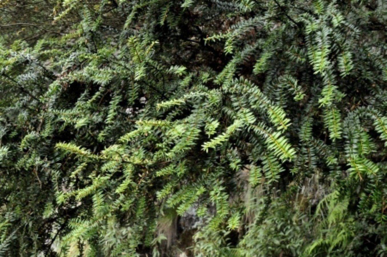 Foliage, Bijia Shan