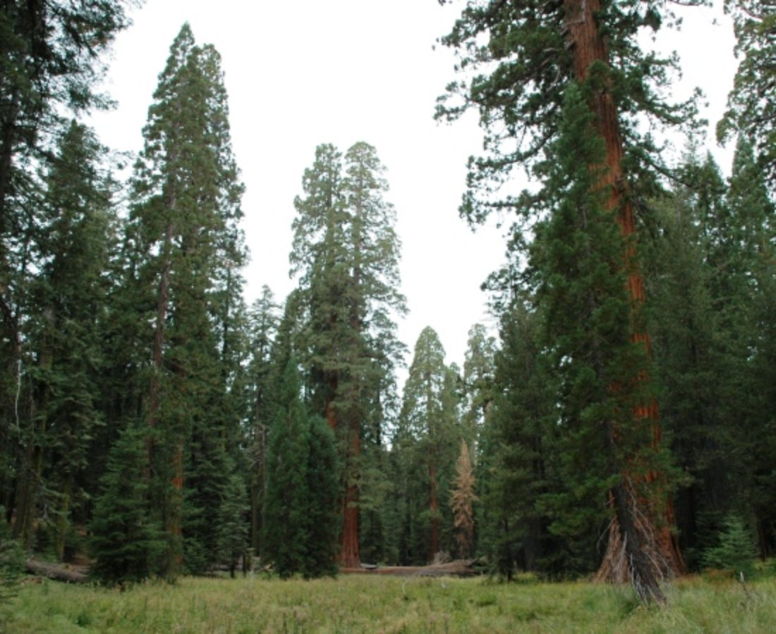 Old-growth forest