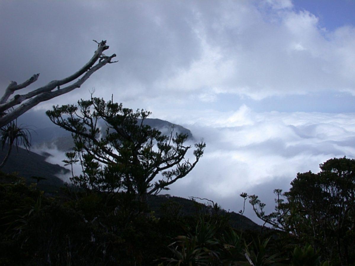 Evening view, Mt. Panié