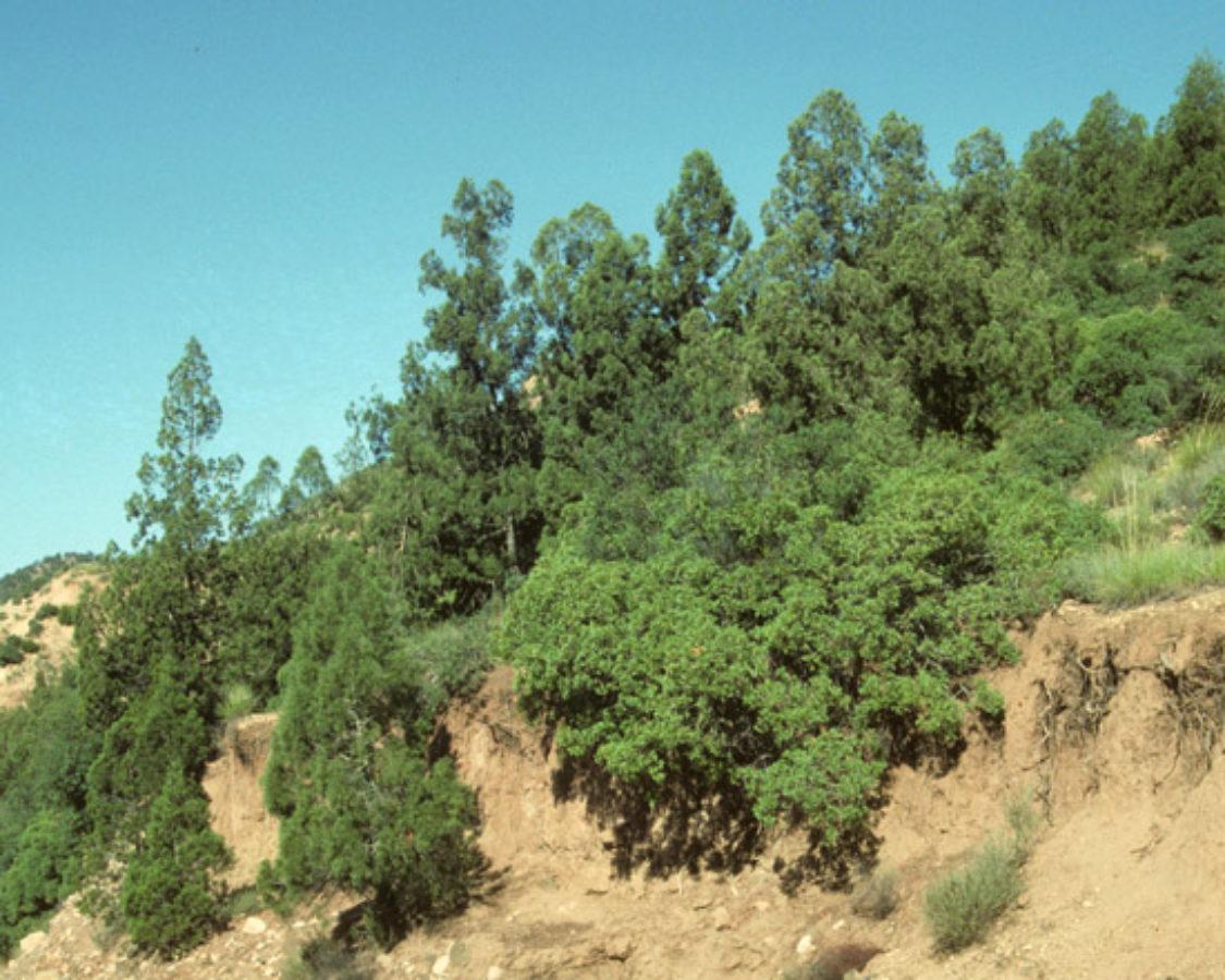 Middle Atlas, Morocco