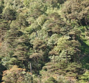 <p>Mt. Fansipan</p>
