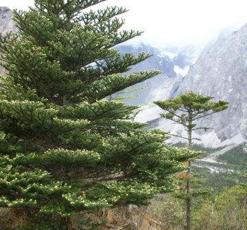 <p>China: Yunnan: Yulongxue Shan<br /></p>