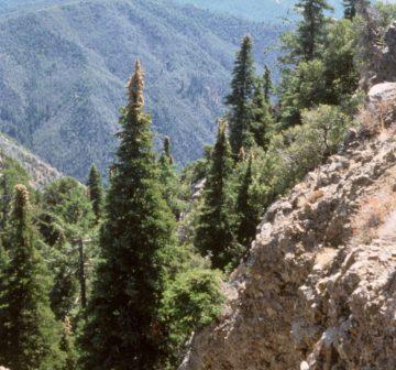 <p>Santa Lucia Mountains, California</p>