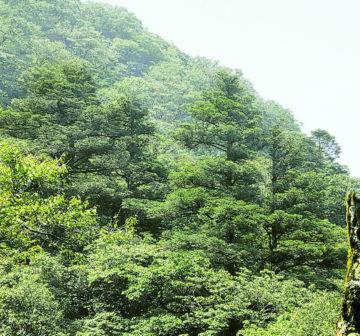<p>China: border of Hunan & Guangxi</p>