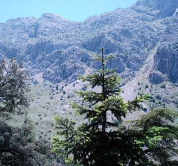 Habitat in the Djebel Babor Mountains