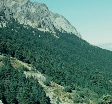 Sierra del Pinar, Spain