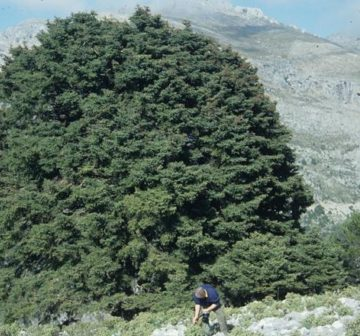 Atypical habit, Sierra de las Nieves, Spain