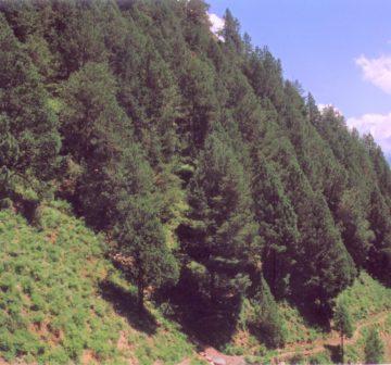 <p>India: Himachal Pradesh; Bharmour</p>
