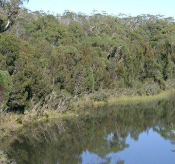 Tasmania - Apsley River