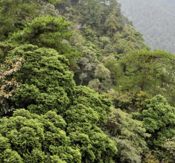 <p>Bijia Shan, Jiangxi (with <em>Pinus Hwangshanensis</em>)</p>