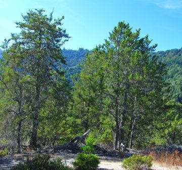 <p>California: Santa Cruz Co.; Bracken Brae</p>