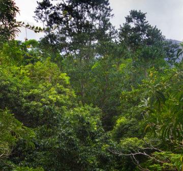 <p>Aneityum Island, Vanuatu</p>