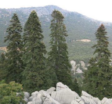 Parc Nacional Talassemtane.