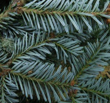 Foliage undersurface