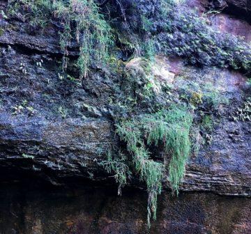<p>Bonnie Doon Falls; Kattomba Blue Mountains</p>