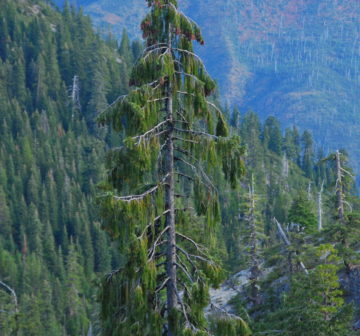 <p>USA: Oregon, Suskiyou Mts; Bear Lake</p>
