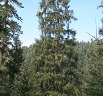 Siskiyou Mountains, Oregon