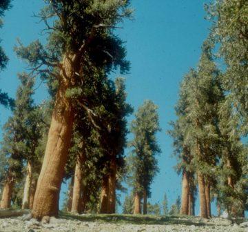 <p>Sierra Nevada, California</p>