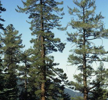 <p>Sierra Nevada, California<br /></p>