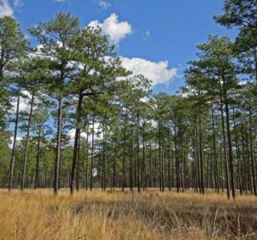 <p>Wade Tract Preserve, Thomas County, Georgia</p>
