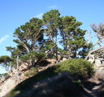 <p>Point Lobos State Park, California</p>