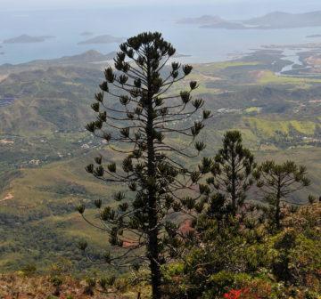 <p>Mt. Koghis; Province Sud, New Caledonia<br /></p>