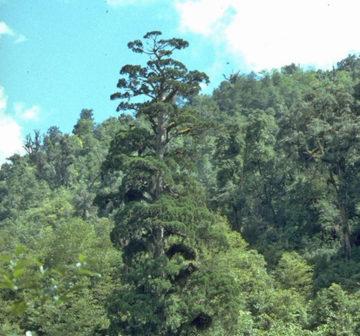 <p>Yunnan, China</p>