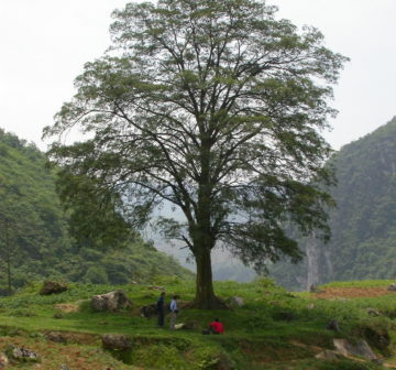 <p>China: Yunnan</p>