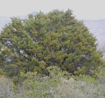<p>California: Sequoia National Forest; Bald Eagle Peak</p>