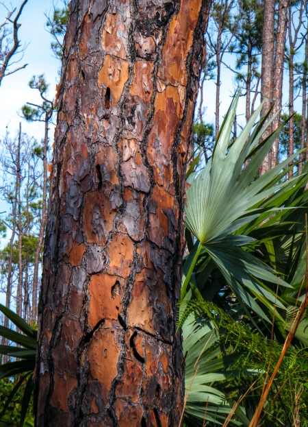 Bark of mature tree